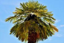 Free Sky, Borassus Flabellifer, Tree, Palm Tree Royalty Free Stock Images - 129291839