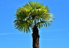 Free Borassus Flabellifer, Sky, Tree, Palm Tree Stock Image - 129291841