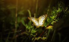 Free Close-Up Photo Of Butterfly Perched On Leaf Royalty Free Stock Image - 129414776