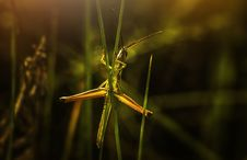 Free Selective Focus Photography Of Green Grasshopper On Leaf Royalty Free Stock Photos - 129414788