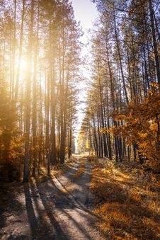 Free Photo Of A Pathway In A Forest Royalty Free Stock Image - 129414996