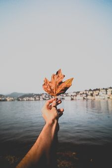 Free Person Holding Dried Leaf Over Body Of Water Stock Images - 129415124