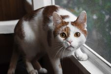 Free Orange And White Cat On Window Royalty Free Stock Photos - 129415218