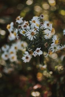 Free White Flowers In Tilt Shift Photography Royalty Free Stock Images - 129415319