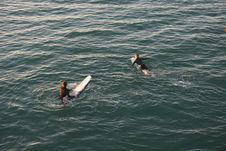 Free Photo Of Two Person Swimming Stock Photography - 129501072