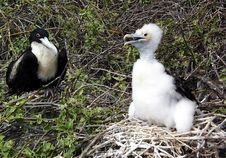 Free Bird, Fauna, Beak, Seabird Stock Photos - 129547493