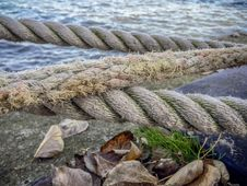 Free Water, Shore, Grass, Sea Stock Images - 129547544