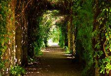 Free Green, Nature, Vegetation, Woodland Royalty Free Stock Image - 129547606