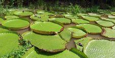 Free Vegetation, Water, Leaf, Botanical Garden Royalty Free Stock Image - 129547646