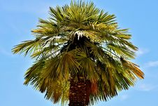 Free Sky, Borassus Flabellifer, Tree, Palm Tree Royalty Free Stock Image - 129547826