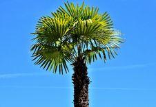 Free Borassus Flabellifer, Sky, Tree, Palm Tree Royalty Free Stock Images - 129547889