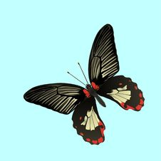 Free Tropic Butterfly Fly 2 Royalty Free Stock Photo - 12964655