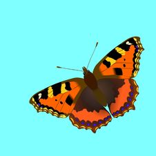 Free Butterfly Nymphalis Utricaeisolated Stock Photography - 12964662