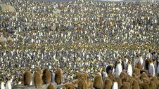 Free Flightless Bird, Penguin, King Penguin, Bird Royalty Free Stock Images - 129752289