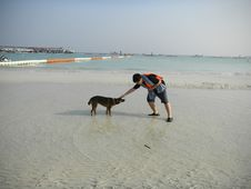 Free Beach, Dog, Body Of Water, Sand Stock Images - 129752604