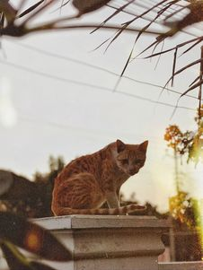 Free Orange Tabby Cat On White Concrete Post Royalty Free Stock Photography - 129786797