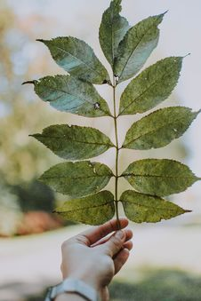 Free Person Holding Green Leaf Royalty Free Stock Images - 129874939