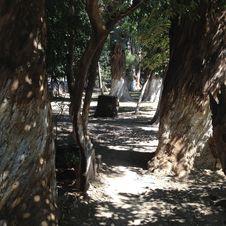 Free Tree, Woody Plant, Plant, Path Royalty Free Stock Photos - 129936968