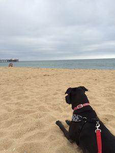 Free Beach, Dog, Sea, Sky Royalty Free Stock Photo - 129937005