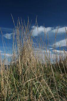 Free Straws On Sanddunes Stock Images - 130114