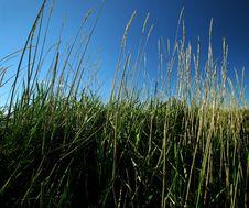 Free Green Grass Stock Image - 130131