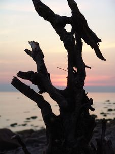 Free Snag On The Beach Stock Image - 130551