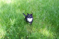 Free Cat In The Grass Stock Photos - 131303