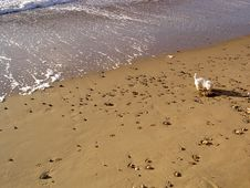 Free Dog On The Beach Stock Image - 133711