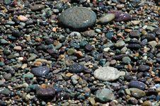 Free Shore Pebbles Stock Image - 136281