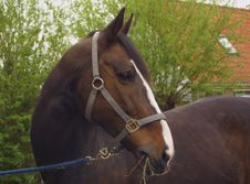Free A Brown Horse Stock Photos - 138873