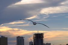 Free Pelican Sunset Royalty Free Stock Image - 139016