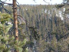 Free Karelian Spring Stock Image - 139111