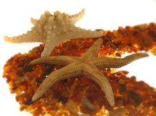 Free Starfish Stock Photos - 139153