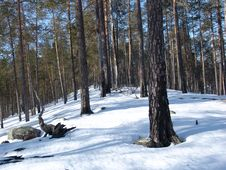 Free Karelian Forest Stock Images - 139154