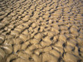Free Gold Sand. Stock Photos - 1304793