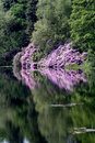 Free Reflections In A Lake Royalty Free Stock Photography - 1305287