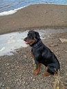 Free Alert Dog Posing On Beach Royalty Free Stock Photos - 1307688