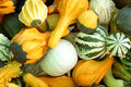 Free Gourds Royalty Free Stock Photography - 1308137