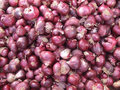 Free Onion Royalty Free Stock Photos - 1309578