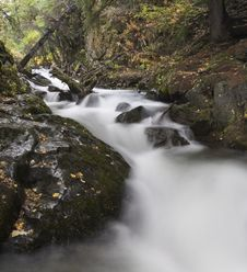 Free Small Creek In Dense Forest Stock Photos - 1300033