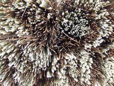 Free Brush Royalty Free Stock Photo - 1301435