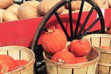 Pumpkins And Squash Royalty Free Stock Photos