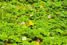 Leaves On A Grass Stock Photo