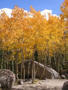 Free Aspens And Boulders Stock Image - 1303481