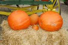 Free Pumpkins Royalty Free Stock Image - 1303566