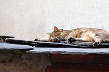Free Catnap Royalty Free Stock Image - 1303996