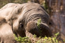 Free Elephant Dinner Stock Photography - 1304772