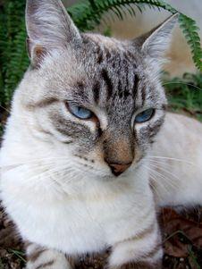 Free Portrait Of Cat Stock Image - 1304971