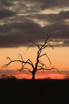 Free Sunset In Kruger Park Stock Photos - 1305133