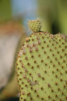 Cactus 3 Stock Photography